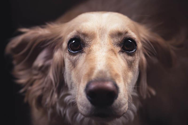 dog documental