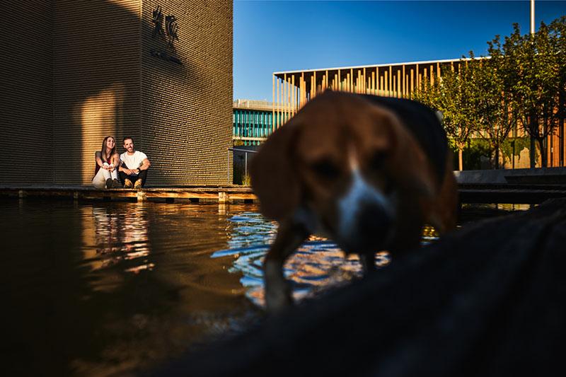 fotos con mascotas en Zaragoza